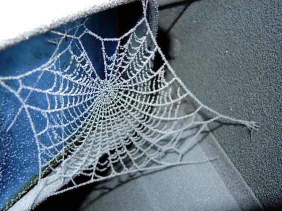 frosty-web-car-dec-16