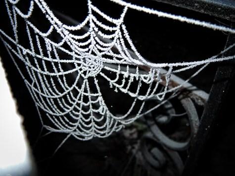 frosty-web-gate-2