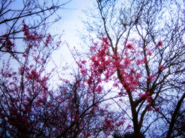cherry-plum-tree-grunge