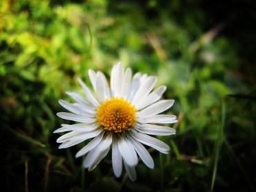 daisy-050417