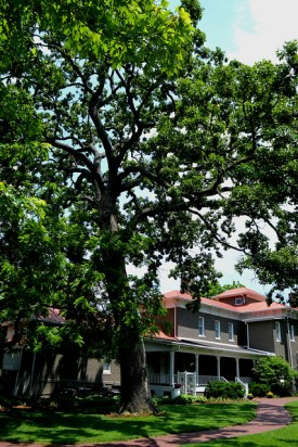 the peel mansion and a huge tree