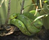 cool snake