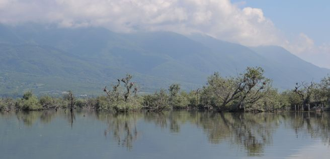 Kerkini's drowned forest