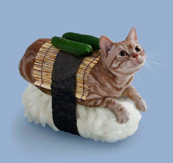 Cucumber roll - and a live cat.
