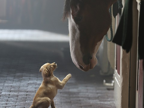 Everyone knows that horses hate puppies. So unrealistic.