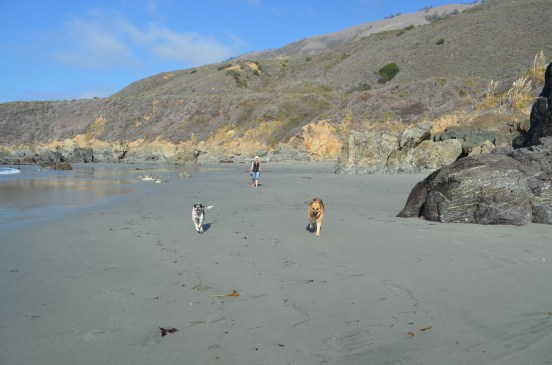 Exploring at a dogs pace