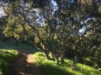 Single track through the oaks