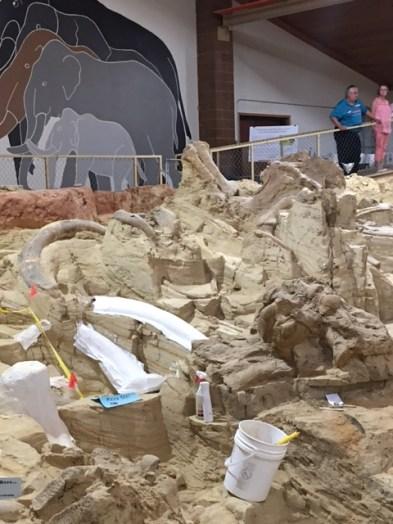 Mammoth Bones Prepared for Transport