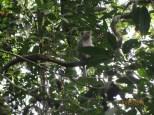 Macaque Monkey_2