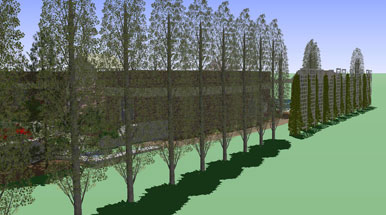 creating privacy through landscaping roots landscaping