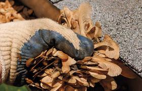 limpieza de canalones en Lugo