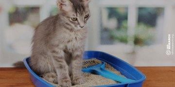 cat sitting in a blue litter box
