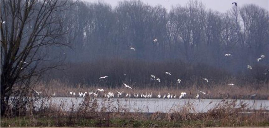 Zbog klime ptice mijenjaju svoje selidbe