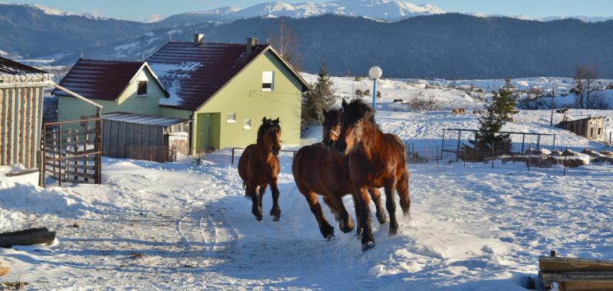 Foto/video: Kozo – Ekipa BHTV-a na Kozlu