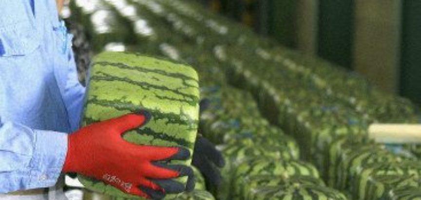NISU ZA JELO, VEĆ ZA GLEDANJE: Za nejestive kockaste lubenice Japanci su spremni izdvojiti pozamašne iznose, evo i zašto