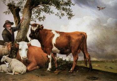 Paulus Potter, The Young Bull