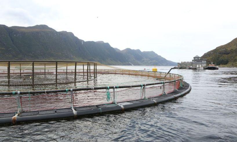 Nærings- og fiskeridepartementet