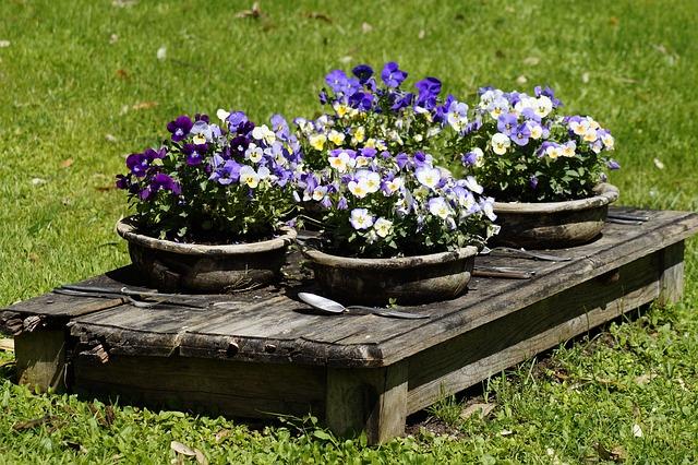 blomster sommer
