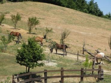 Quasi otto ettari di pascoli più 17 di boschi...