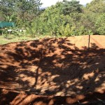 Coming Soon – The Tilapia Pools