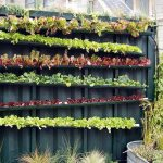 Recycled Bottle Gardens