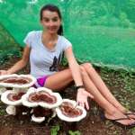 Huge mushrooms with girl