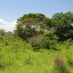 Costa Rica Eco Village Lot