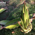 Permaculture Plant Nerd Quiz