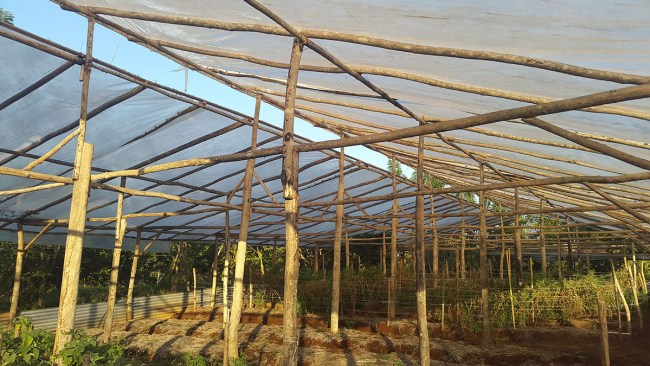 Biggest Greenhouse