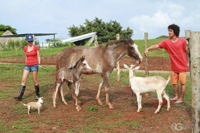 Horses-and-Animals---1200px