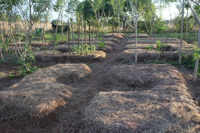 Mulched Beds with Partial Shade