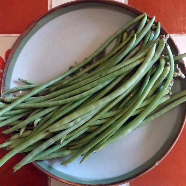 Ejote francés- French grn beans | Rancho Nextia