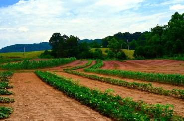 farm wide view