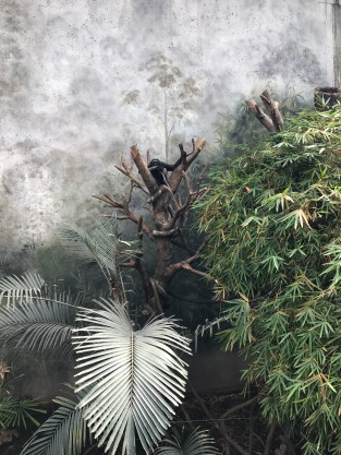 Jungle exhibit at Henry Doorly Zoo