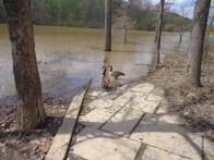 lake needwood geese
