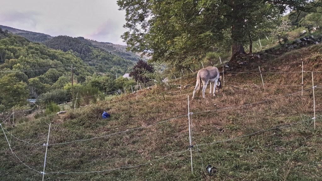 rando inside, randonnée âne, mezenc
