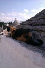 13-Alberobello chat qui dort3