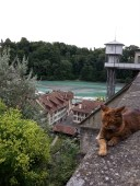 Chat au dessu de l'Areuse à Berne