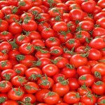Genome-edited tomato enters Japanese market