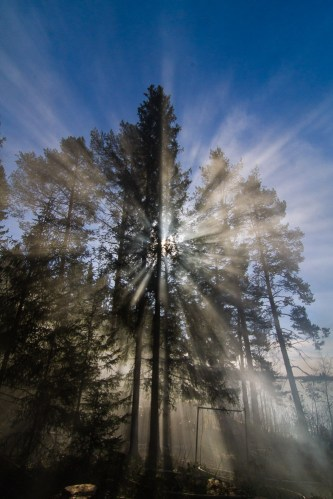 sunrays through smoke and silhuetted tree