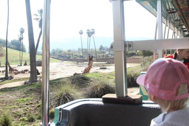 More safari
