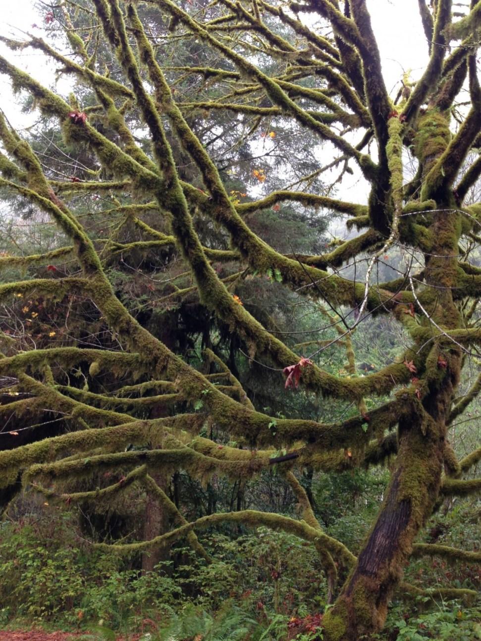 Furry tree
