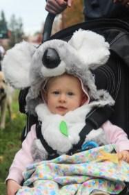 A Koala for Halloween