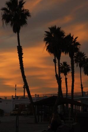 Night palms