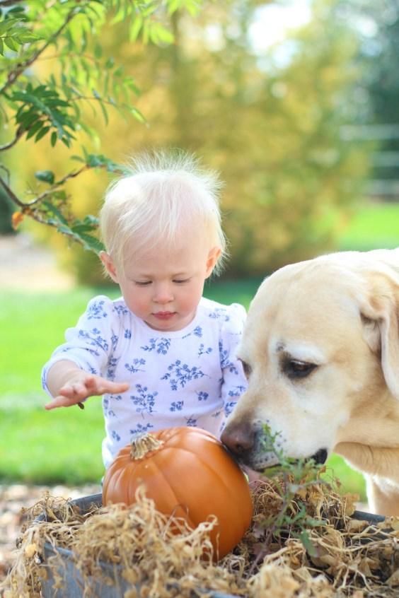 Ry and Nixon carving a pumpkin