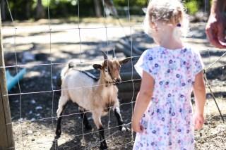 Hi Goat