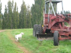 Candy checks out the grader