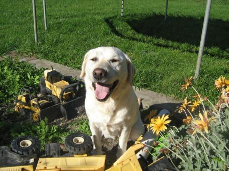 One happy dog