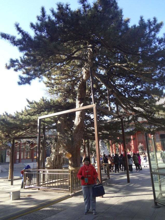 Pohon keramat berusia ratusan tahun