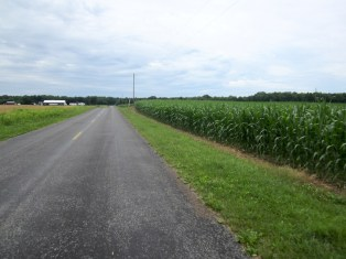 miles and miles of corn